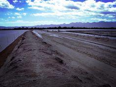 #landscape #fields #saltfields #kupang #eastnusatenggara #procamapp #maxcurve #iphoneography