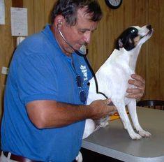 Dr. Wessner - Holistic Veterinary Clinic - Holistic Heartworm Treatment