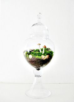 Limited Edition: Moss Terrarium Planted Apothecary Jar with Handmade Toadstool Mushrooms.