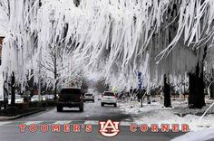 Toomer's Corner Auburn, Alabama Brett proposed at Toomer's Corner! Despite being an Alabama Fan this is one of my favorite places. Auburn Alabama, Auburn Football, Auburn Tigers, College Football, Auburn Game, Football 2013, Baseball, Champs, Thing 1