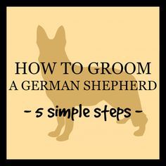 How to groom a German Shepherd