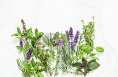 Fresh herbs on marble stone background Basil rosemary sage thyme mint dill savory chive lavender Stock Photo
