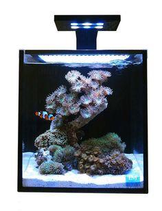 Innovative Marine 10 Gallon NUVO Fusion Nano Aquarium Premium Starter Kit…