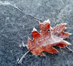 Frost & Ice Photography via @picturecorrect #phototips #photography
