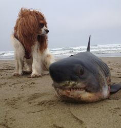 Looks like Danny the dog has found himself a rather unusual companion.   Ocean Beach, San Francisco