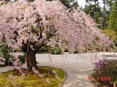 Japanese Garden, Portland Oregon
