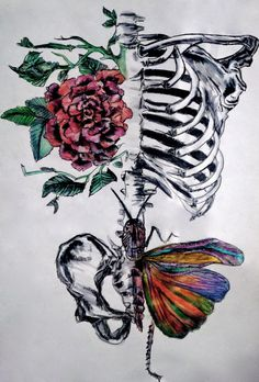 Betusharapatusha: photo hola que tal en 2019 anatomy art, 3d Drawings, Tattoo Drawings, Body Art Tattoos, Skeleton Art, Medical Art, Anatomy Art, Skull Art, Art Inspo, Art Sketches