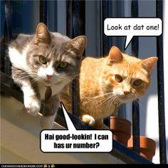 catcalling....ha ha ha