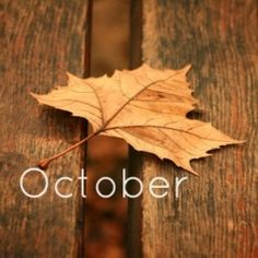 October is my month - Blender Online