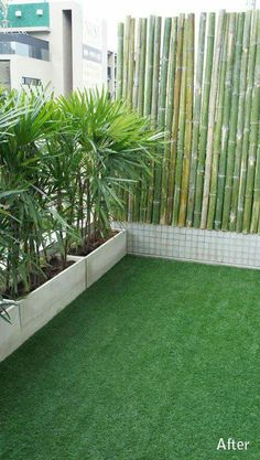 bangkok balcony designer - love this simple effect with bamboo and potted palms - balcony garden 100 - New Room - Balkon Apartment Balcony Decorating, Apartment Balconies, Apartment Balcony Garden, Apartment Plants, Apartment Ideas, Balcony Plants, Indoor Plants, House Plants, Privacy Plants