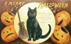 This cat is having a WTF moment. | 13 Adorable Vintage Cats Celebrating Halloween