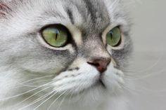 Sandy Millar (@sandym10)   Unsplash Photo Community Community, Cats, Photos, Animals, Gatos, Animales, Kitty Cats, Animaux, Animal Memes