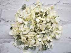 "Lyo Carnations make Gentle, Graceful and Glorious Natural Petal Confetti. This mix of Off White Carnations combined with Lyo Eycalyptus is simply stunning, we think it screams spring / summer. 100% Biodegradable, bleach and dye free. Just as nature intended them to be. Lyo Carnations really are Wedding Goals, you can easily see why this flower is called ""the flower of love"" #wedding #confetti #weddingvibes #microwedding #biodegradableconfetti Biodegradable Confetti, Biodegradable Products, Confetti Bars, Uk Bride, White Carnation, Sage Wedding, Wedding Confetti, Wedding Goals, Real Flowers"