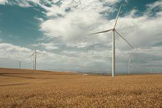 windmills and wheat fields
