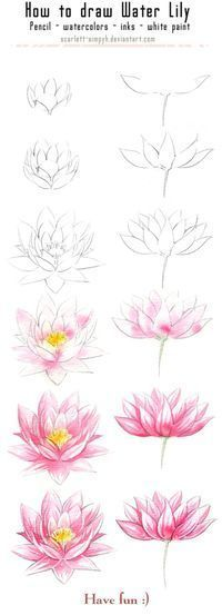 131 - How to draw and paint Waterlily by_ljia-