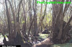 Bigfoot Bathing - New photos released and enhanced