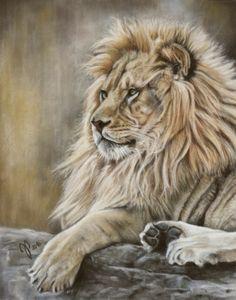 Löwe ~ Zeichnung ~ Pastell - Wildlife ~ lion drawing ~ pastel ~ Jutta Pallasch ~ Pastellblicke