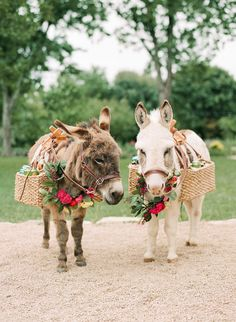 Gabriela and Alejandro's Vibrant Spring Wedding — Wild Sky Events: Event Design & Production - Yes, you can have miniature donkey bartenders at weddings in Texas. Vote for best dressed, I think - Cute Donkey, Mini Donkey, Baby Donkey, Baby Cows, Mini Pigs, Cute Baby Animals, Animals And Pets, Funny Animals, Beautiful Horses