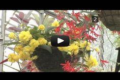 fertilizer-feeding your houseplants
