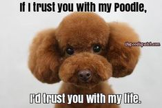 IF I TRUST YOU WITH MY POODLE ID TRUST YOU WITH MY LIFE