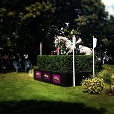 jenthevet's photo  of Greenwich Park on Instagram
