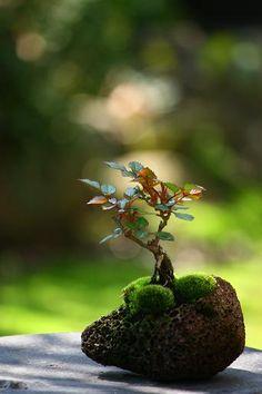 tree of miniature Rose moss ball