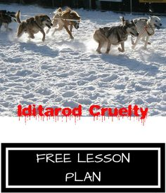 Use this documentary to introduce your students to dogs exploited by the dog-sledding industry. #teachkindness #lessonplans