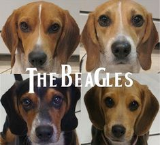 The Beagles ><