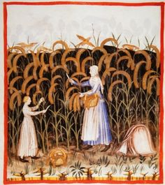 This image from Tacuinum Sanitatis, a medieval health handbook, dated before 1400, depicts a peasant with her daughter gathering ears of maize