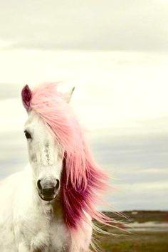 pink horses | pink horse horses pink hair cool magic