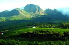 Stellenbosch winery region near Cape Town - magnificient Provinces Of South Africa, Opening Day, Touring, Scenery, Country Roads, Places, Cape Town, Travel, Wineries