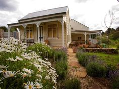 Stone path lined with lavender and pretty white daises leading to a sun drenched wrap around veranda... Ahhh!