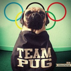 Theres only one team I cheer for at the Winter-Olympics in Sochi ;-) Go Team Pug, GO!