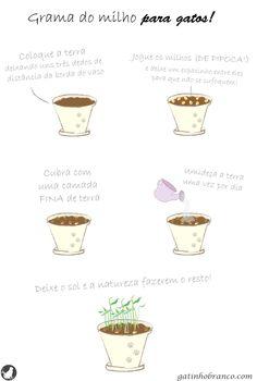 Grama de milho de pipoca para gatos é saudável e ajudar a eliminar as bolas de pelo, aprenda a plantar. Popcorn grass for cats is healthy and helps eliminate hairballs, learn to plant.