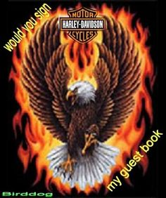 Harley Davidson Logo Photo: This Photo was uploaded by dj_birddog. Find other Harley Davidson Logo pictures and photos or upload your own with Photobuck. Eagle Images, Eagle Pictures, Cool Pictures, Patriotic Pictures, Harley Davidson Wallpaper, Harley Davidson Logo, Animated Screensavers, Eagle Wallpaper, Wings Like Eagles