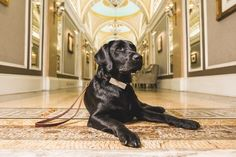 For National Dog Day, tail-wagging ways to spoil your best friend Dog Friends, Best Friends, Fairmont Copley, Guide Dog, Spoil Yourself, Dog Years, In Boston, Cool Costumes, Dog Bed
