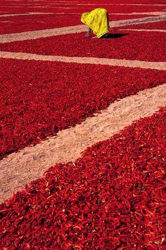 Drying Red Chilli by SUDIP ROYCHOUDHURY