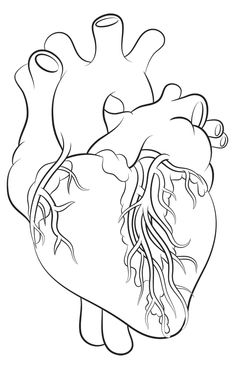 How to draw a heart - science drawing lesson drawing ideas 3 Outline Art, Outline Drawings, Cartoon Drawings, Easy Drawings, Drawing Sketches, Drawing Ideas, Anatomical Heart Drawing, Human Heart Drawing, Realistic Face Drawing