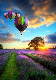 hot air balloons in color