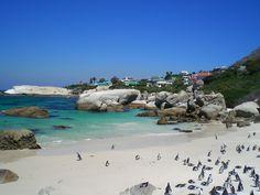 Boulder Beach, Capetown South Africa