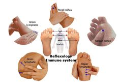 Reflexology Immune system - Reflexology therapy for the immune or lymphatic system strengthens immunity. It improves the ability to attack the disease-causing invaders (e.g. organisms and substances).5 Surprising Reflexes to boost ImmunityThe immune system protects against the diseases; identifying pathogens (viruses to parasitic worms) and distinguishing from own body tissues. The immune system uses leukocytes (white blood cells) to destroy disease-causing organisms or substances. Thymus…