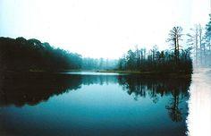 americayall:  Bastrop State Park on 35mm slide film. www.americayall.com instagram @americayall #poler #polerstuff #campvibes