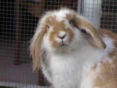 Please Remember to Advocate for your rabbit - Rabbits United Forum