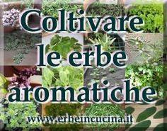 Erbe in cucina - Coltivare le proprie erbe aromatiche - Le saporite