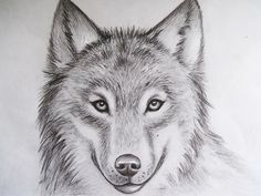 Bildresultat For Wolf Face From Front Drawing Special Wolf In 2019