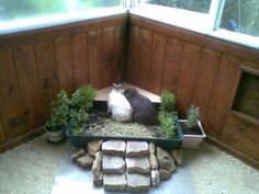 """How To: Make a House Rabbit Littergarden -- Super cute idea, but it seems like the waste would accrue too quickly to just """"empty the excess from the drip tray"""" and have the rabbits still be ok with it."""