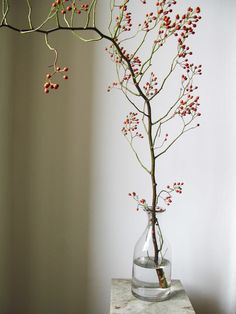 Fall Tree Branch - Simple, Beautiful