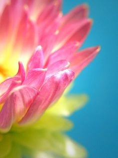 . Blue Yellow, Pink And Green, Macro Flower, Color Inspiration, Pink Flowers, Beautiful Flowers, Bloom, Nature, Garden Stairs