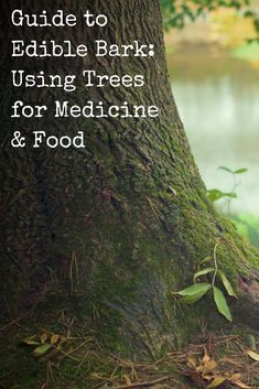 Edible Bark: Using Trees for Medicine & Food Great info on finding natural medicinal sources!Great info on finding natural medicinal sources! Survival Supplies, Survival Food, Outdoor Survival, Survival Tips, Survival Skills, Wilderness Survival, Bushcraft Skills, Survival Shelter, Healing Herbs