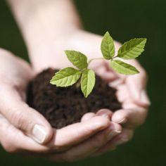 Eine Pflanze, die beschützt wächst.